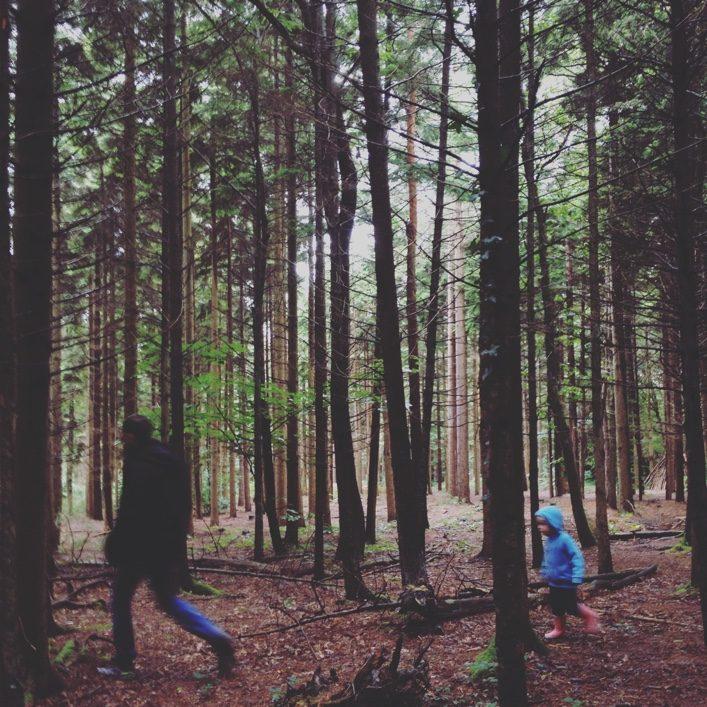 HJ_BLOG_Forest Walk